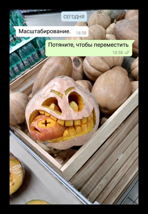 Вид обоев в приложении WhatsApp